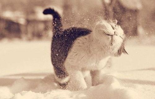 christmas-kitten-snow-winter-Favim.com-1584626