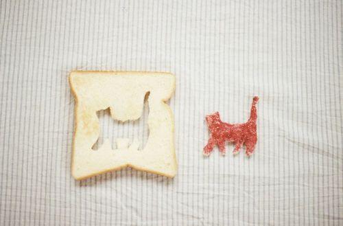 bread-bright-cat-cat-lover-Favim.com-2099834