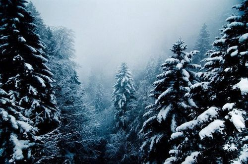 beautiful-dark-fog-forest-Favim.com-2362922