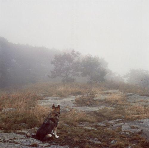 animal-animals-beautiful-dog-Favim.com-907761