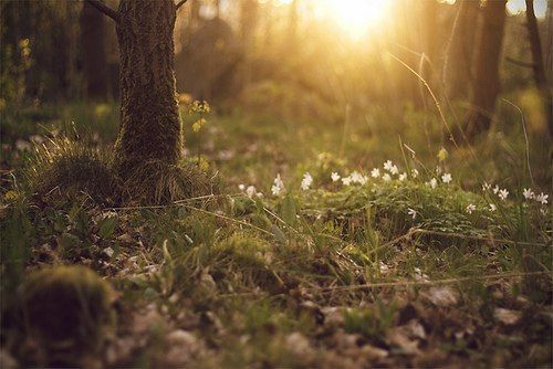 beautiful-flowers-forest-nature-Favim.com-2514939