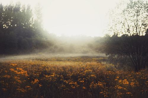 field-flower-flowers-fog-Favim.com-1538010