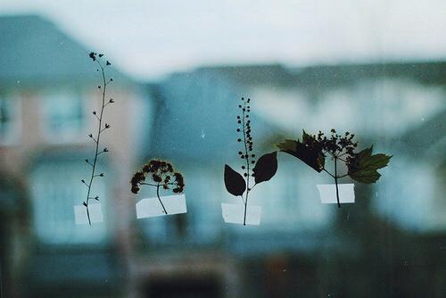 dry-flowers-focus-grunge-Favim.com-2341976