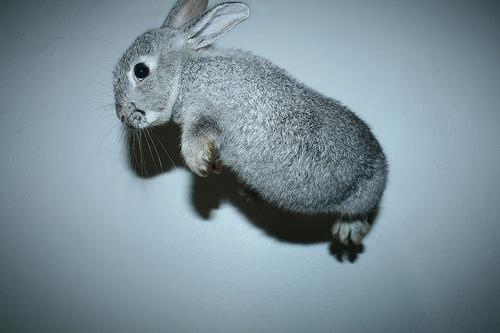 awn-cute-jump-jumping-lol-rabbit-Favim.com-106085