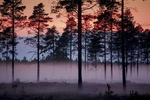 beautiful-fog-forest-mist-Favim.com-2851649