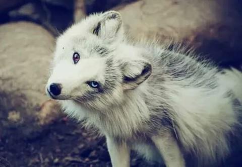 animal-animals-cute-dog-Favim.com-2869350