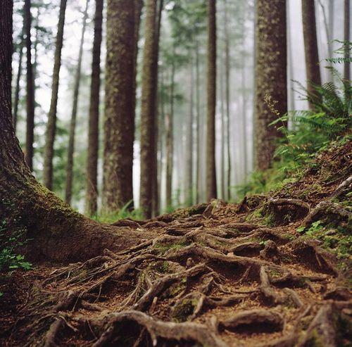 Favim.com-trees-roots-481196