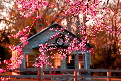 asia-beautiful-beauty-blossom-Favim.com-2733332