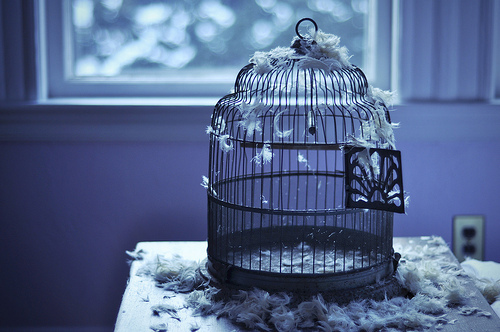 bird-cage-empty-feathers-fly-favim-com-344475